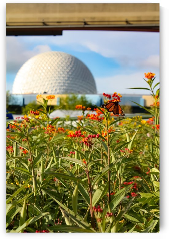 Food and Wine EPCOT by Justin Pistone