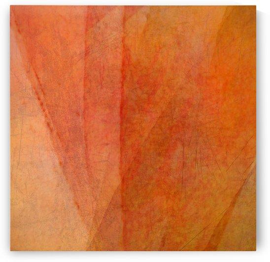 Veiled  by Mirella Pavesi