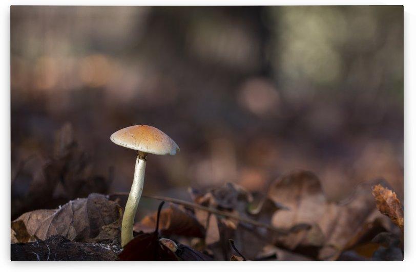 Mushrooms by Pietro Ebner