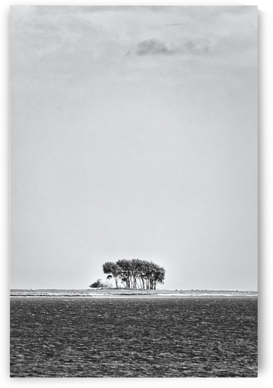 Tree Island by Kirsten Warner
