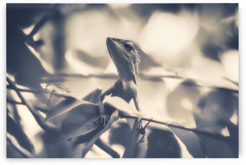 Chameleon by Ira Silence