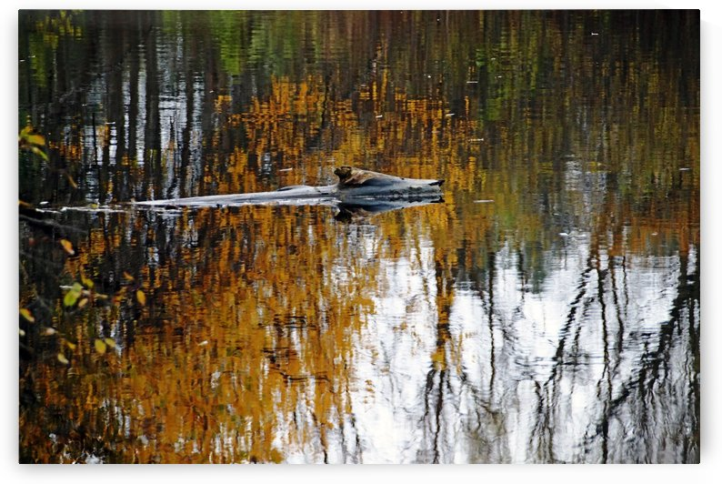 Autumn Pond In Gold by Deb Oppermann