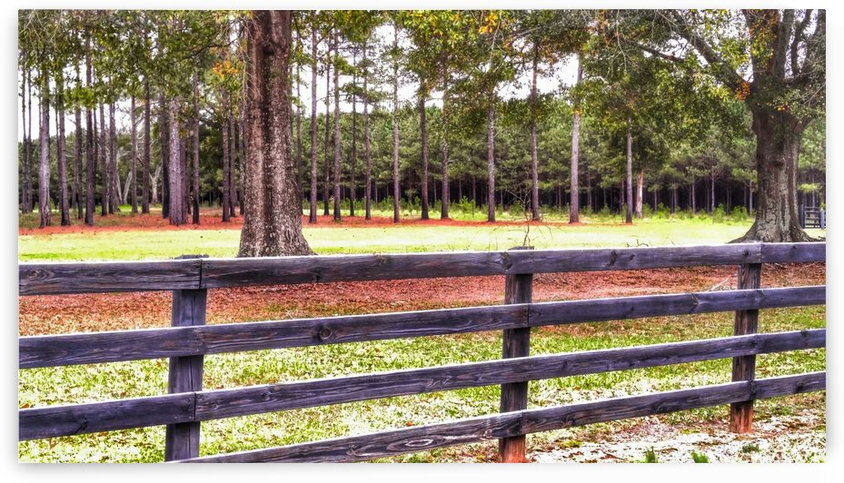 Autumn Fence Line by Randall Ledbetter
