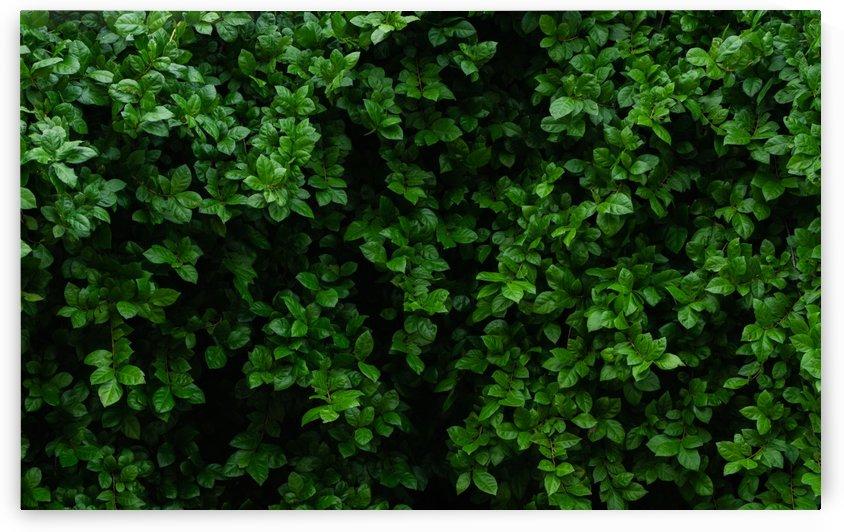 Frame of green leaves by Krit of Studio OMG