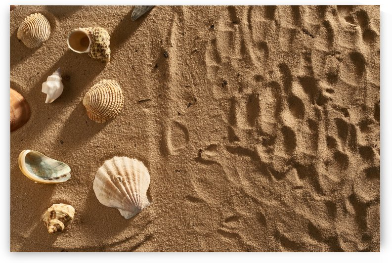 Seashells on a yellow sand by Tovstyzhenko Andrii