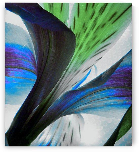 Vibrant Iris by Linda Peglau