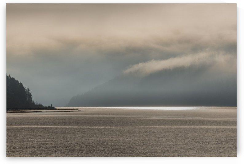 Alberni fog by Violet Carroll