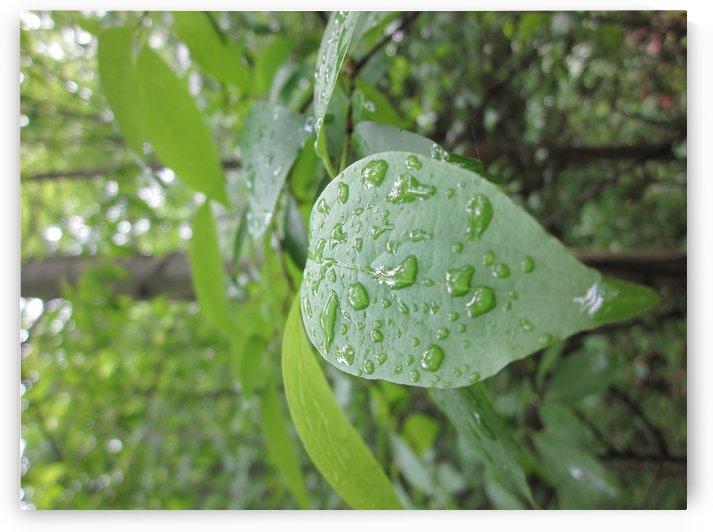 Rain Drops  by Karen Smith