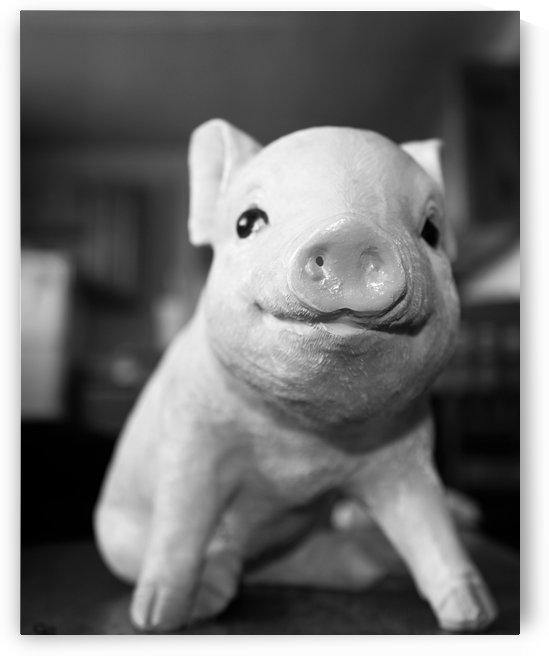 Little Piggy by Karen Smith