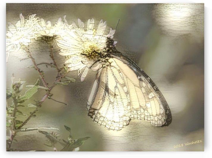 Paper Butterfly Dream by Wacholtz