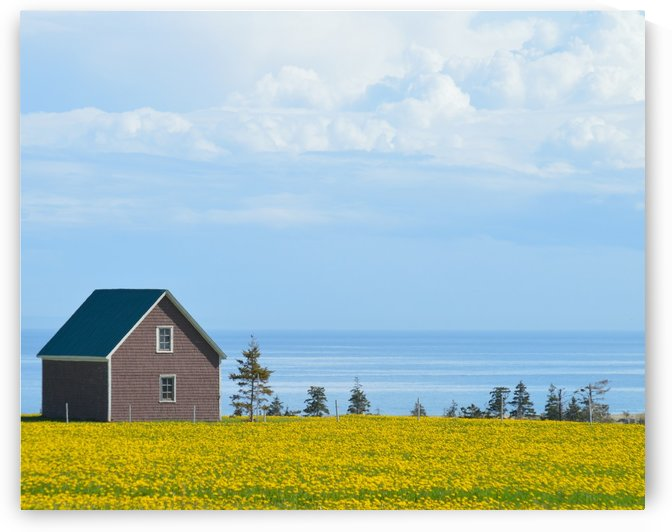 Prince Edward Island landscape by Violet Carroll