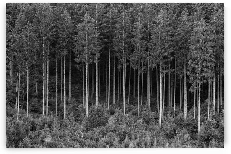 FOREST 01 by Tom Uhlenberg