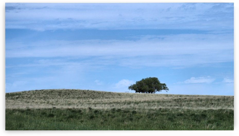 Prairie pleasantry by Violet Carroll
