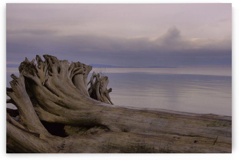Driftwood by Violet Carroll