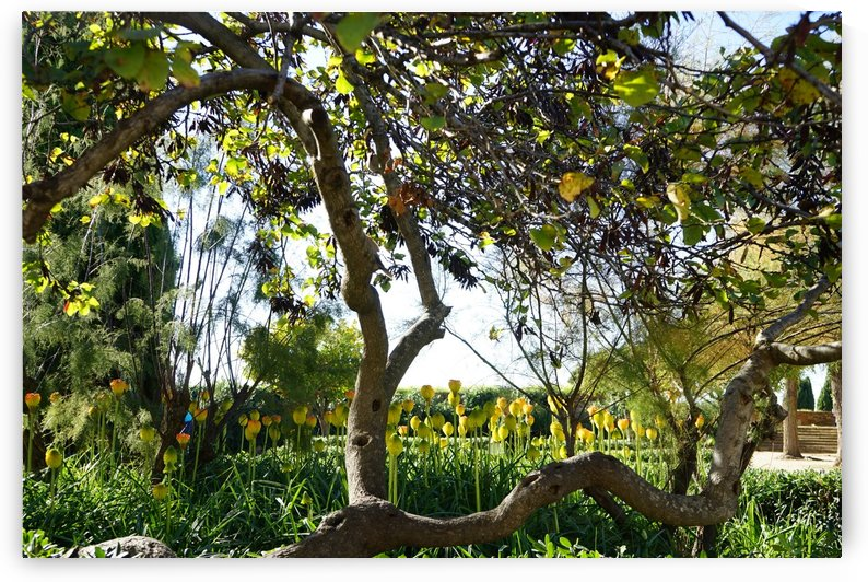 Montjuïc Garden by Xisa