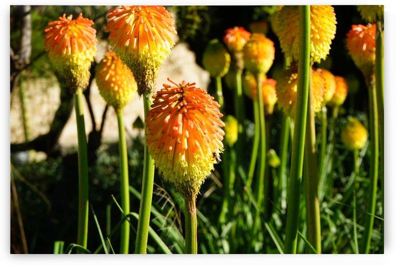 Montjuïc Flowers by Xisa