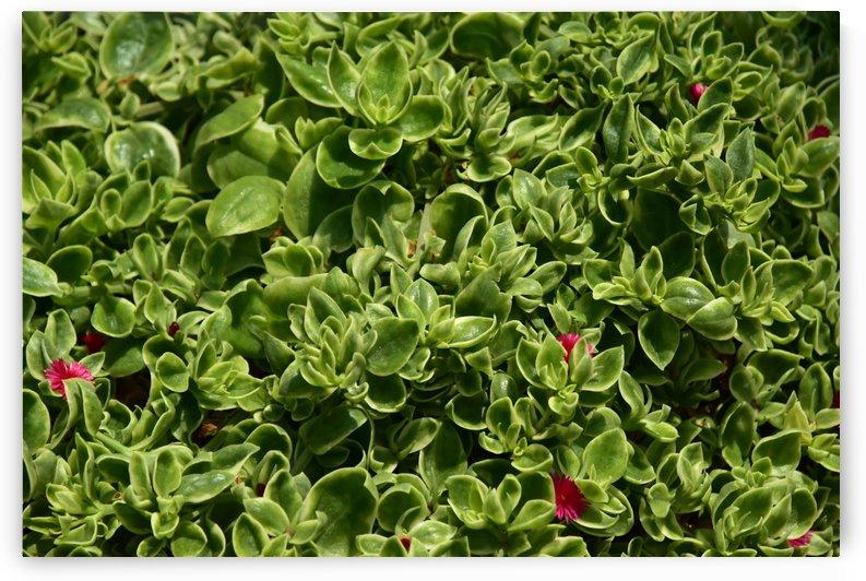 Plants - Cactus - 005 by Rich Lasam