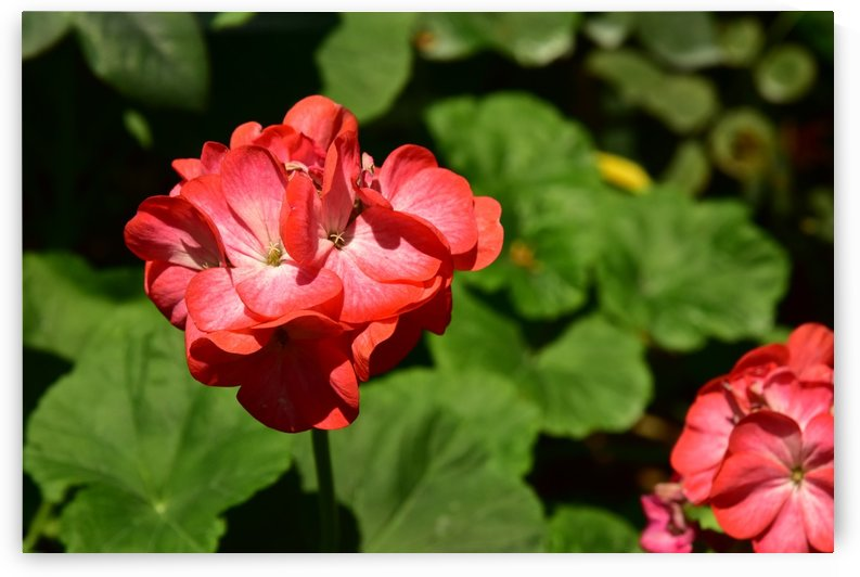 Plants - Flowers - 010 by Rich Lasam