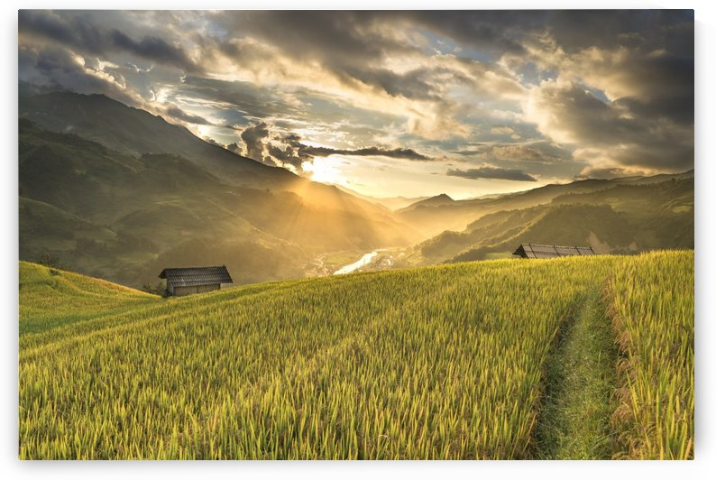 Beautiful Nature Landscape Field harvest crops greenery sunrise Photography landscape photo Scenery by fabartdesigns