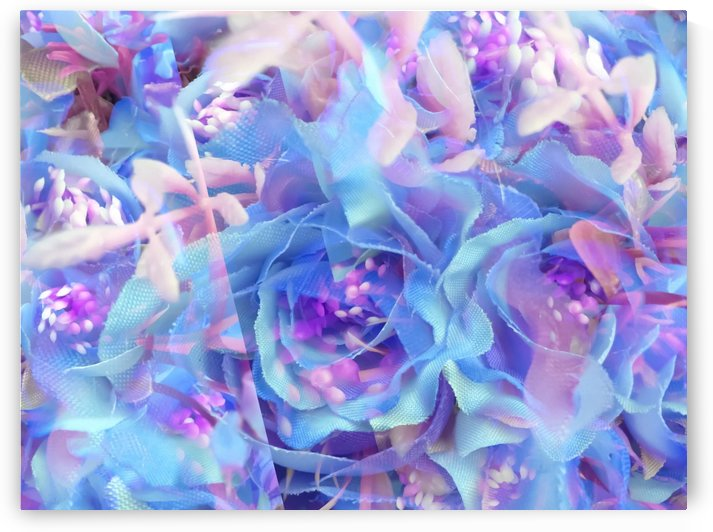 blooming blue rose texture abstract background by TimmyLA