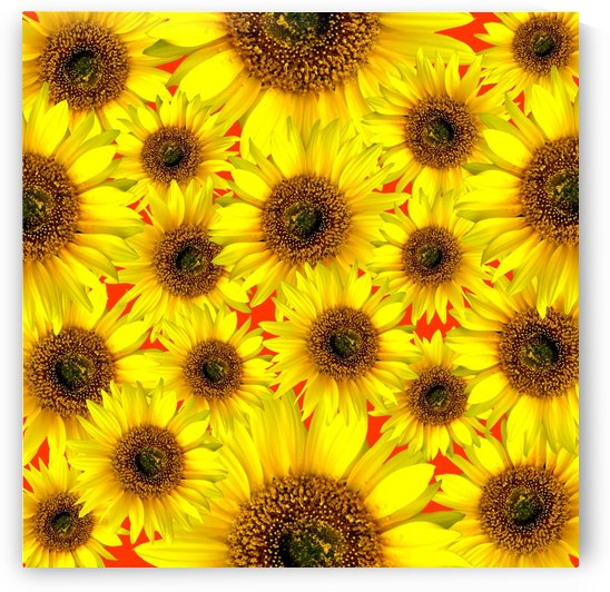 Beautiful colourful flower blossom flower background design floral home decor decoration sunflower sunflowers by fabartdesigns