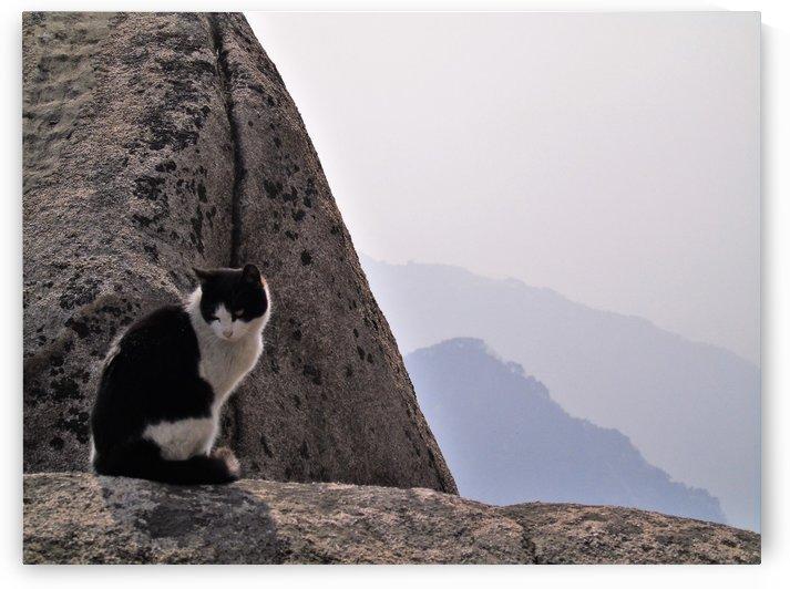 Mountain Cat by Afra Niafattah