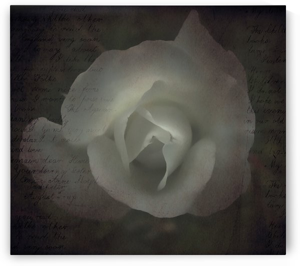 Old Rose with Letter Overlay by Linda Peglau