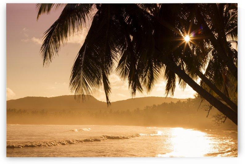 beach, nature, ocean, palms, sea, seashore, sunrise, sunset, water, waves, by fabartdesigns