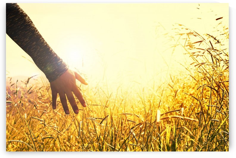 hands, grasses, sunset, feel, touch, field, grass, peace, tranquility, nature, by fabartdesigns