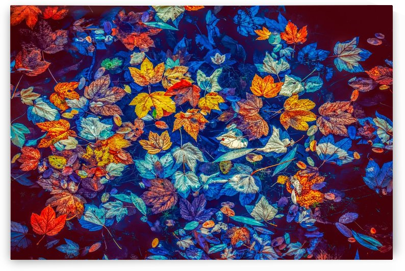 fall leaves, water, nature, leaves, colorful, autumn colours, waters, fall foliage, mood, autumn, october, by fabartdesigns