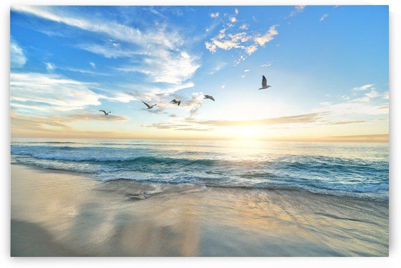 each, birds, dawn, dusk, hd wallpaper, nature, ocean, outdoors, sand, sea, seascape, seashore, sky, sunset, water, waves, by fabartdesigns