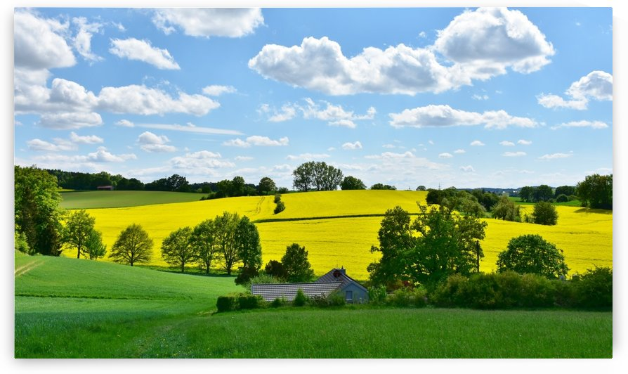 landscape, nature, oilseed rape, field, agriculture, rural, panorama, spring, clouds, sky, arable, cloudy, blue, weather, cumulus, green, yellow, meadow, hill, idyllic, in the green, graze, bavaria, by fabartdesigns