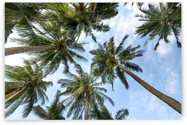 palm trees, sky, palms, background, summer, tropical, nature, holidays, travel, paradise, outdoors, by fabartdesigns