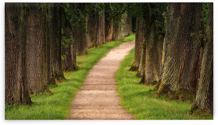 tree, avenue, away, nature, path, hiking, forest, migratory path, mood, by fabartdesigns