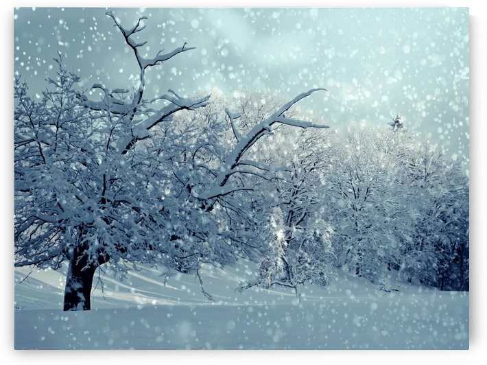 winter, wintry, snow, snowy, snowfall, trees, winter magic, frost, winter dream, nature, white, cold, winter forest, landscape, mood, frosty, winter mood, snow landscape, snowed in, by fabartdesigns