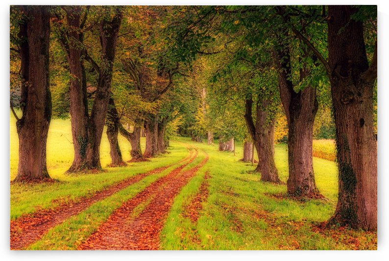 tree, avenue, nature, landscape, tree lined avenue, away, distance, trail, autumn, leaves, forest, green, mood, green leaves, lane, path, by fabartdesigns