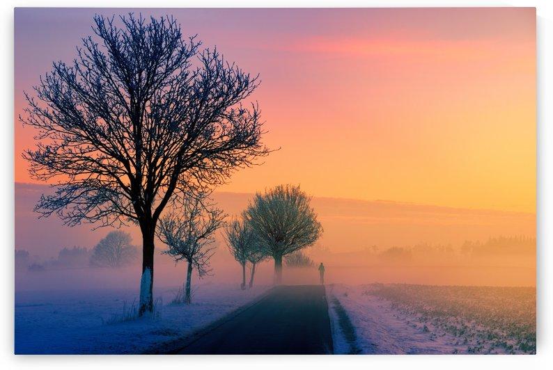 winter, fog, dawn, sunset, nature, landscape, jogger, road, away, path, tree, twilight, idyllic, evening, mood, abendstimmung, sky, cold, snow, evening sky, by fabartdesigns
