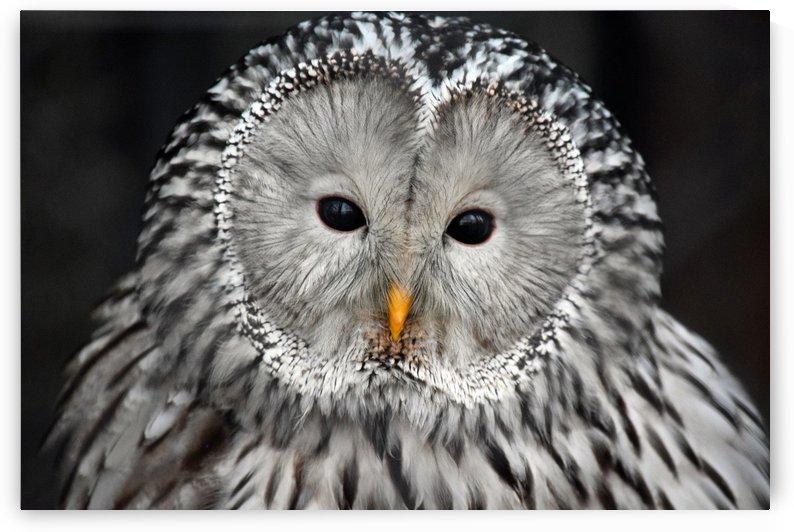 Owl Beauty Wall  Art Decor by Kikkia Jackson