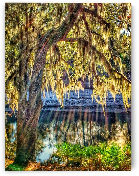 Suwannee River by Pamela Winter