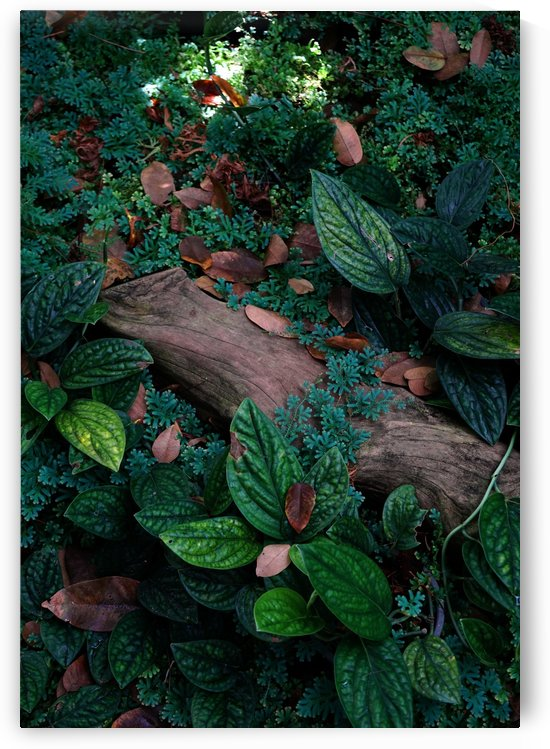 Rainforests floor by Krit of Studio OMG