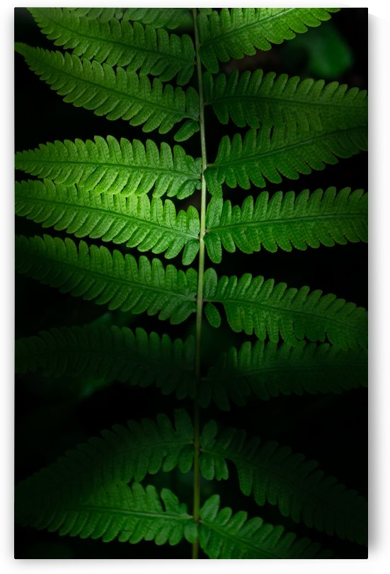 Green leaves in light and shadow by Krit of Studio OMG