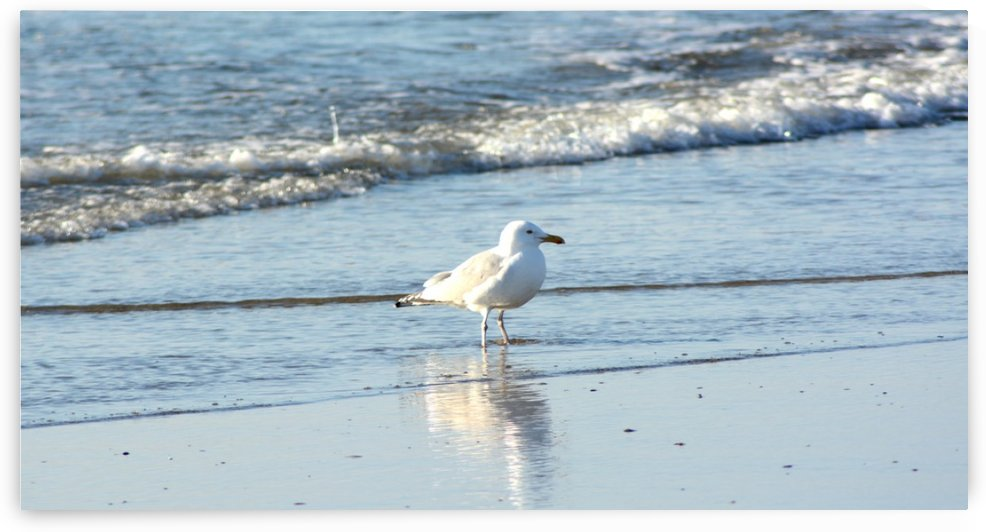 seagull 1 by Shore Shots by Jerry Hussar