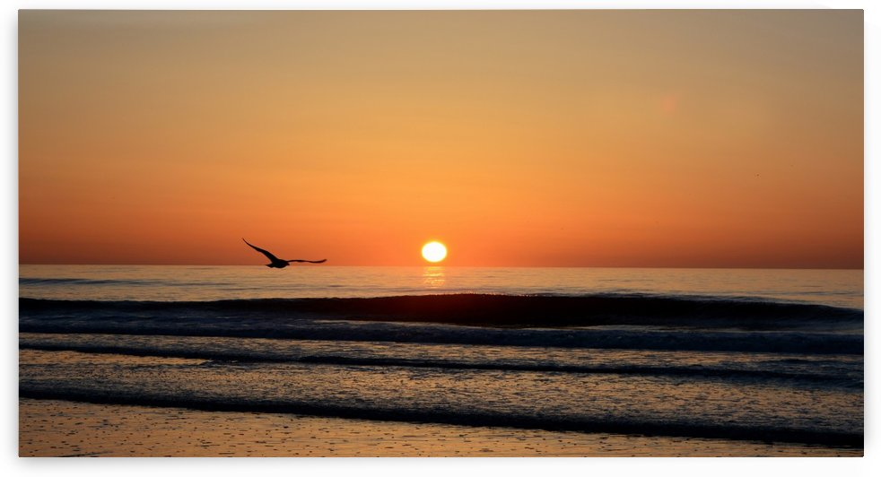 Sunrise seagull by Shore Shots by Jerry Hussar