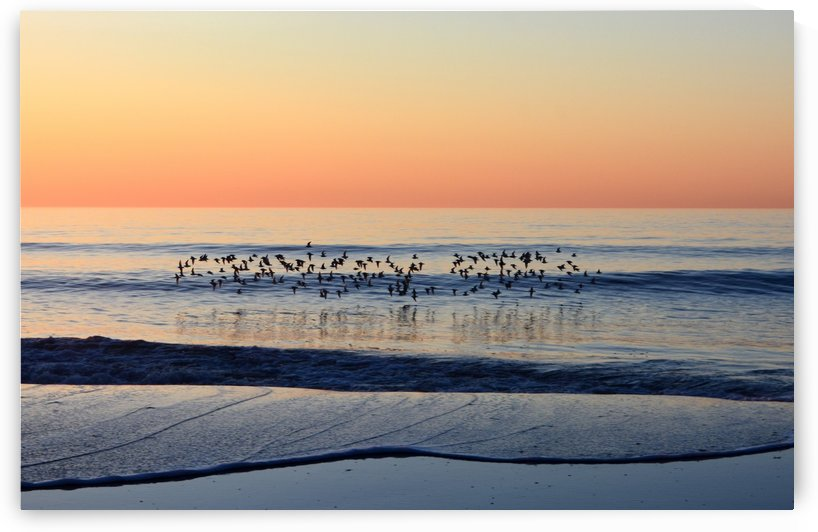sandpipers at sunrise by Shore Shots by Jerry Hussar