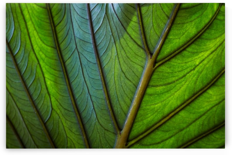 Green leaf with light and shadow by Krit of Studio OMG