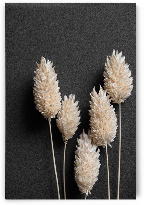 Dried flower head by Krit of Studio OMG