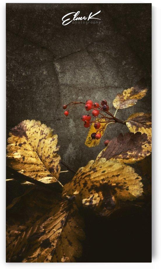 Autumn by ElmeK