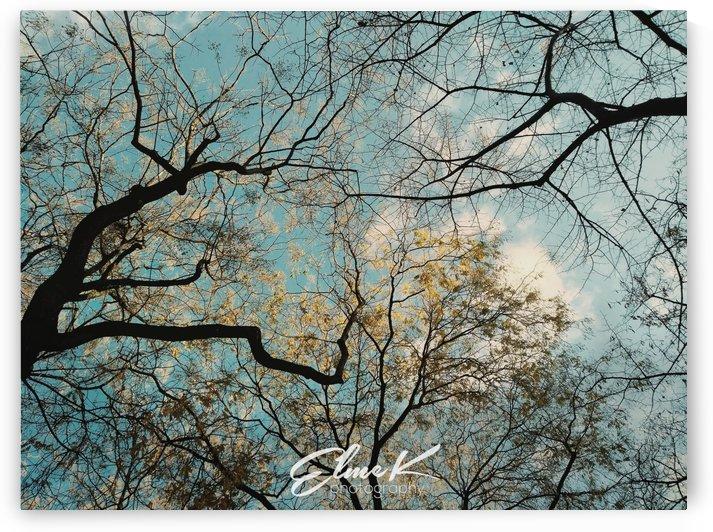 Tree Veins by ElmeK