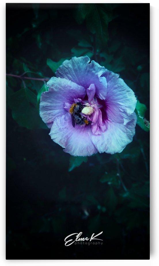 Purple Morning  by ElmeK