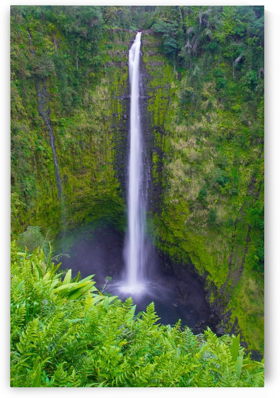 Tropical Falls - Hawaii Vertical by Steve Luther